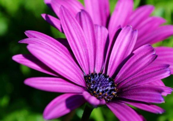 Cvijeće za sušno ljeto - Vrijeme.net